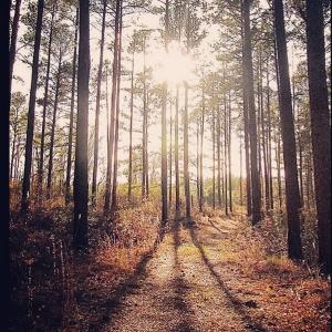 Bartram Forest Ambassador via Instagram