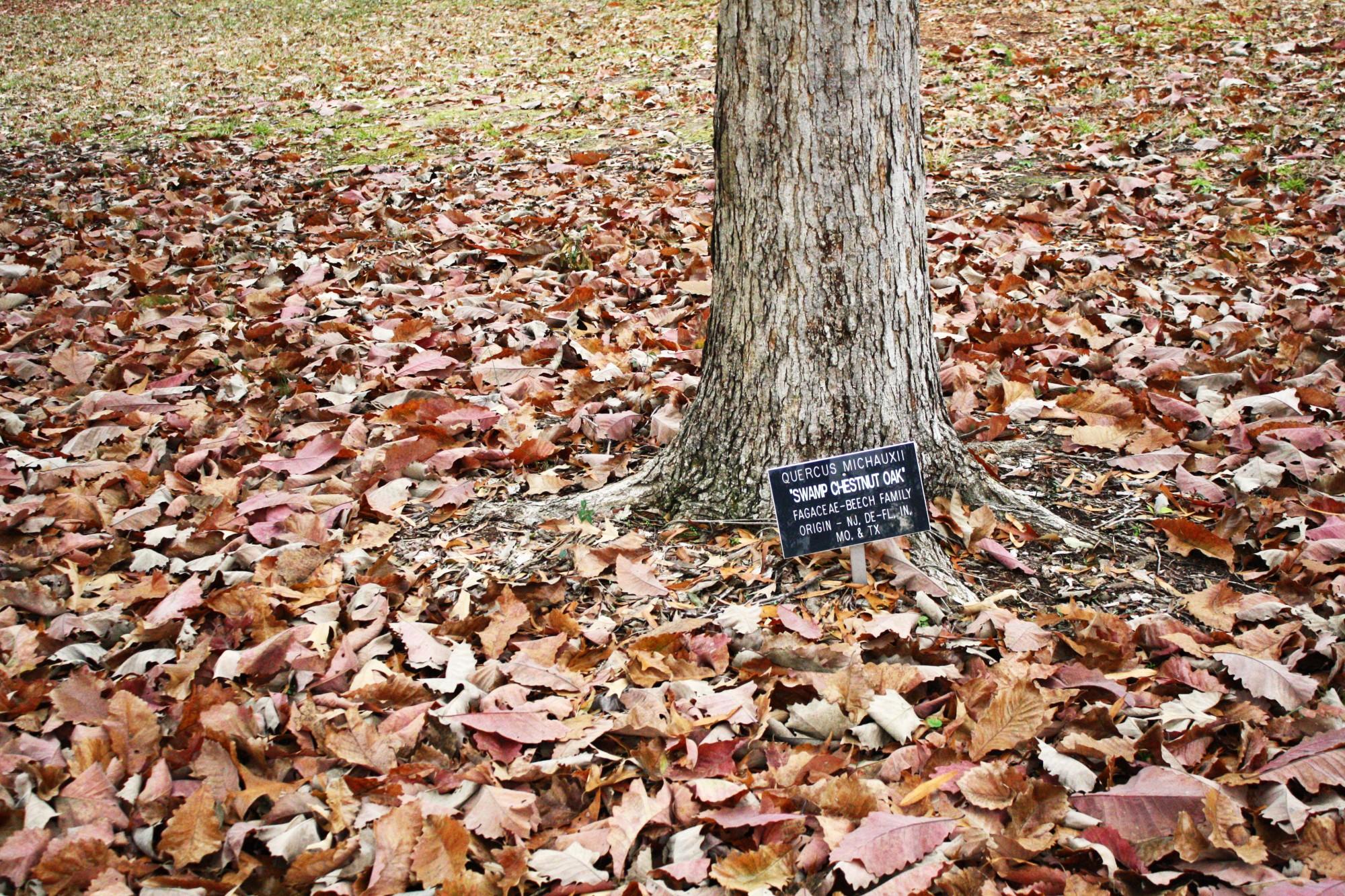 Fall at Lockerly Arboretum